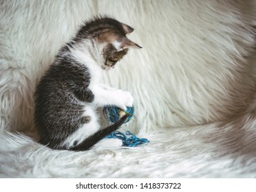 Domestic kitten on the armchair playing with a ball of wool