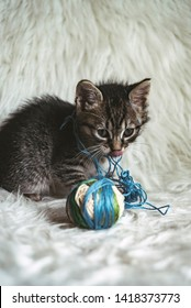 Domestic kitten on white shaggy blanket playing with a ball of wool