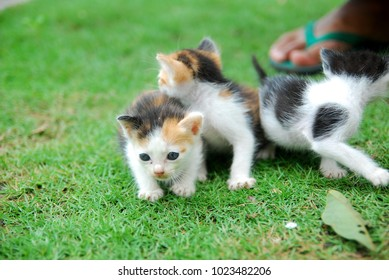 Domestic kittens learn to walk on green grass