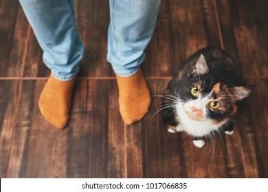 Domestic life with pet. Playful cat and his owner (young man) at home.