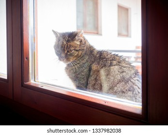 A domestic male at looking into the house through the window.