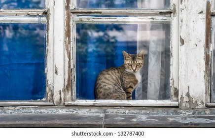 Domestic short-hair cat sitting at old window with rotting wood and peeling paint.