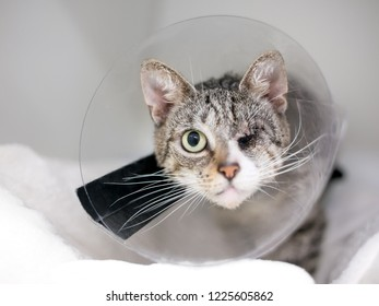 A domestic shorthair tabby cat with one eye, wearing a protective Elizabethan cone collar after surgery