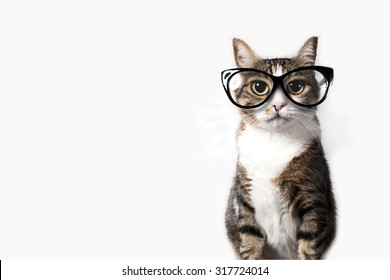 Domestic tabby cat with eyeglasses on a white background.