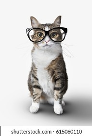 Domestic tabby cat with eyeglasses on a white background. (Feet and fur fixed version)
