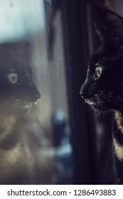 Domestic tortoiseshell cat kitty feline looking through the window photo