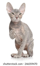 Similar Images, Stock Photos & Vectors of A hairless cat