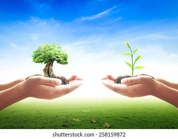 Donate concept: Two human hands holding big and small tree on farming agriculture background