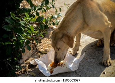 donate the food to stray dog in the temple