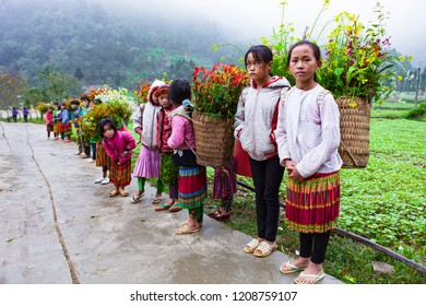 DONG VAN, HA GIANG, VIETNAM, October 13th, 2018: Unidentified ethnic minority kids with baskets of rapeseed flower in Hagiang, Vietnam. Hagiang is a northernmost province in Vietnam