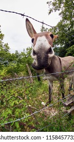 donkey behind barbed wire