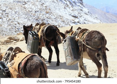 Donkey carrying a bucket of water on winter season
