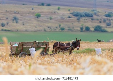 Donkey and cart on farm field
