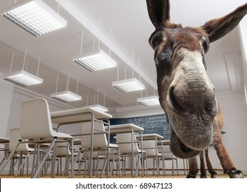 A donkey in a classroom ( in many countries this has a bad pupil connotation)