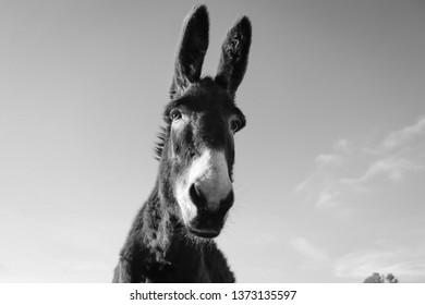 Donkey close up