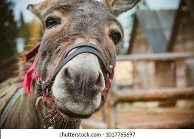 The donkey is close to the camera, the donkey's nose is close up. Toned soft focus.