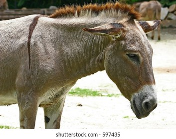 Donkey close up.