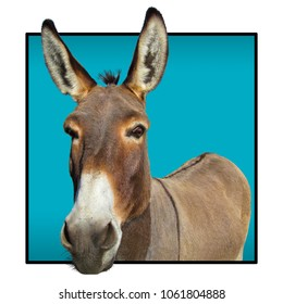 Donkey - closeup view. Portrait of cute farm animal.