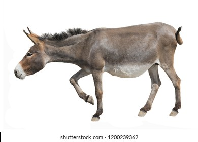 a donkey is coming isolated a on white background