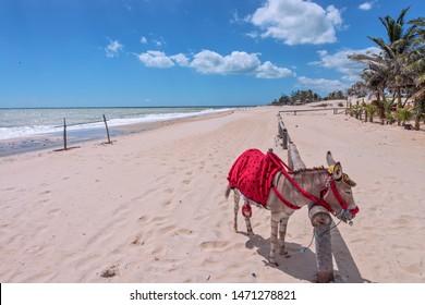 Donkey at Cumbuco Beach, Fortaleza, Brazil