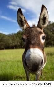 Donkey curious happy