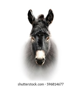 donkey face isolated on white
