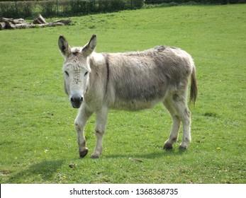 donkey farm, green grass, animal, nature