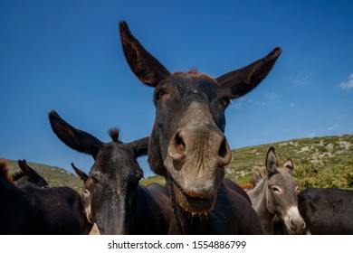 Donkey farm on the island
