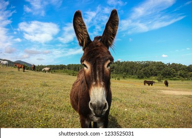 A donkey in a farm in Sintra
