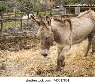 Donkey in the Fence