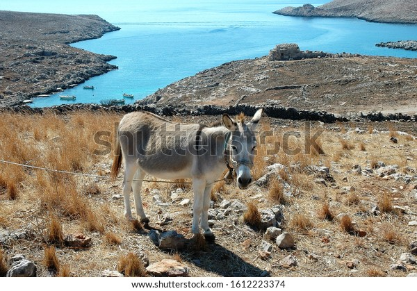 A donkey in a field near a gulf in Mani Greece