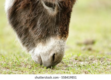donkey in a field  in sunny day, nature series