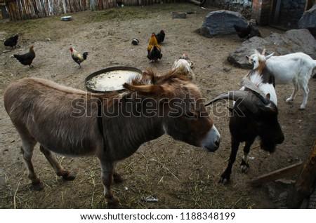 Donkey Goat Chicken Stock Photo Edit Now 1188348199 Shutterstock