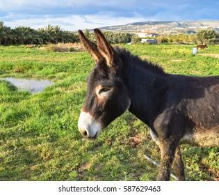 Donkey good and kind