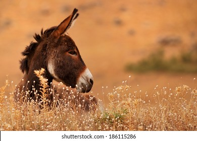 Donkey in donkey grass on brown background