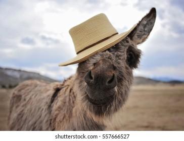 Donkey in a Hat