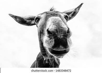 Donkey head close-up taken by downside