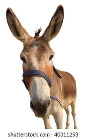 Donkey head isolated on white
