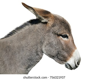 Donkey head and neck isolated on white background