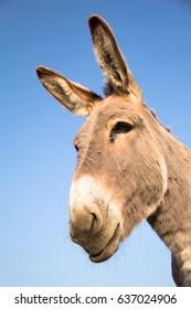 Donkey head in worm's-eye view