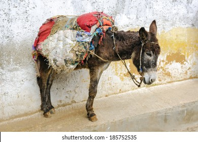 Donkey in a horse-cloth on the street of the medina in Fez, Morocco