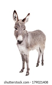 Donkey isolated on the white background