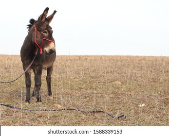 Donkey, jackass - domestic animal.