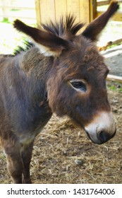 donkey jackass farm mammal mule domestic animal head