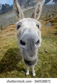 Donkey looking at the camera