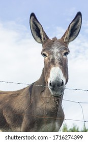 Donkey looking at the camera. The look of a gullible animal. Muzzle burro full face close up. Contact Zoo. Communication with nature and animals. Wild life in the lap of nature.