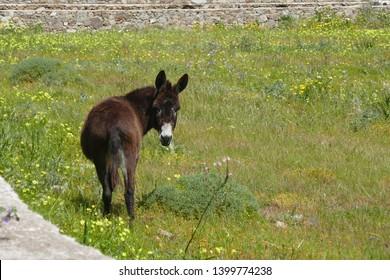 donkey looks back on a meadow
