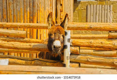 a donkey looks out from behind the fence allocative the head on the post