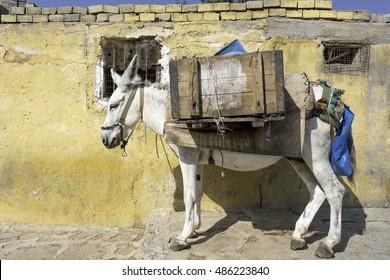 Donkey in Mardin, Turkey