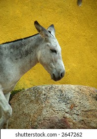 donkey in Mexico